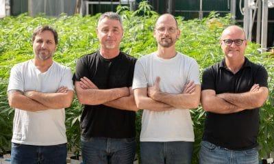 RCK cannabis startup