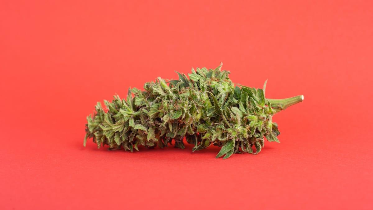 Close up of cannabis bud