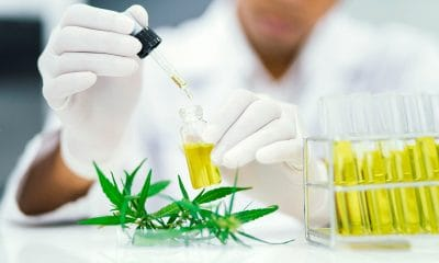 cbd testing in laboratory
