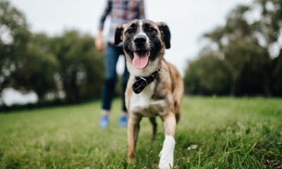 CBD benefits for animals