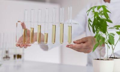 cannabis formulations cancer