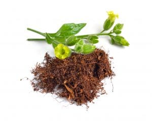 Nicotine dependency: Can CBD help? A pile of brown loose tobacco lies on a white background next to a green plant stem with yellow petals