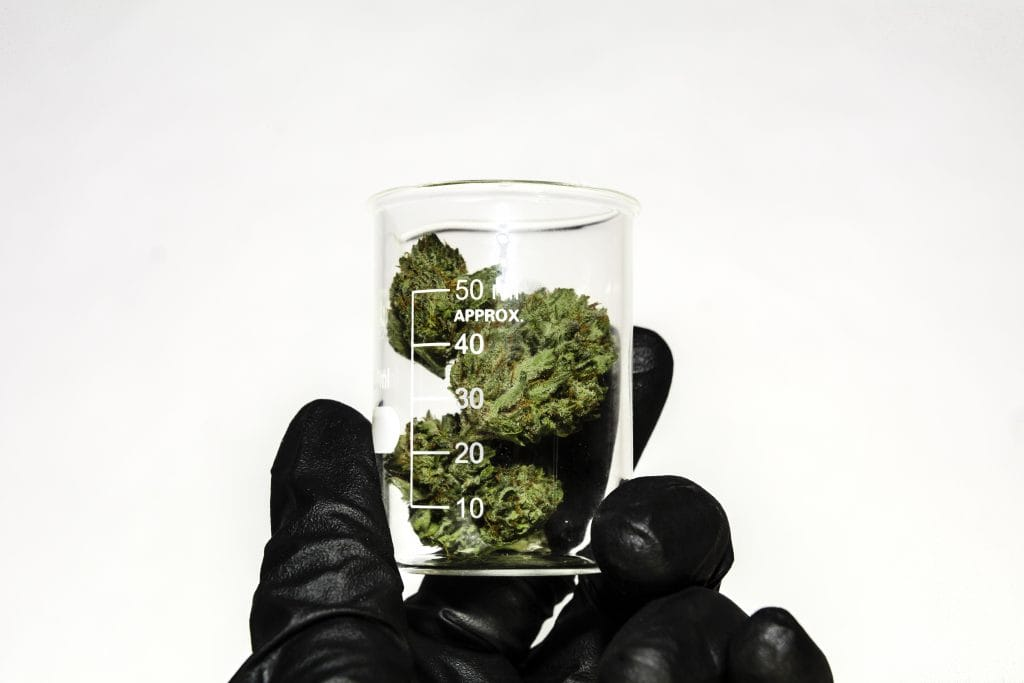 Medical cannabis prescriptions: A hand in a black rubber glove holds a small glass jar of cannabis flower