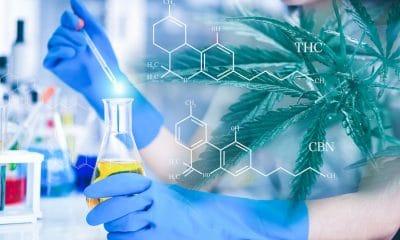 cannabinoid clinical trials