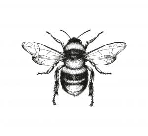 Bees: a black and white lined drawing of a bee