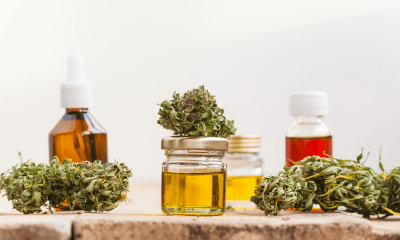 Obesity: A row of yellow CBD oil in small bottles with cannabis flowers around them